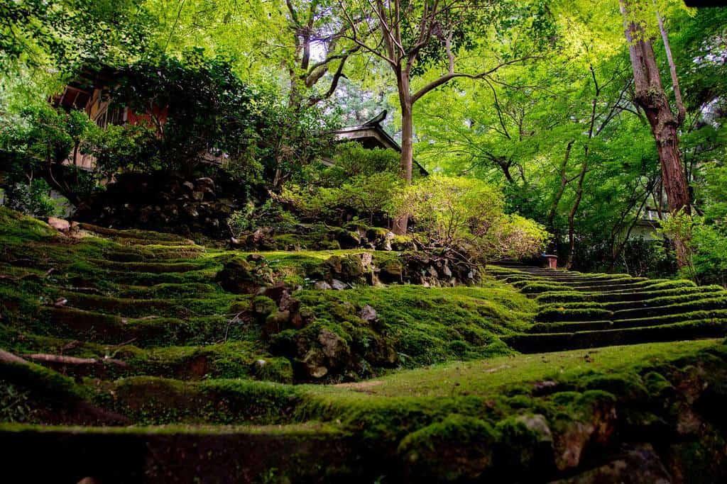 moss garden shade garden ideas araaakiii_a