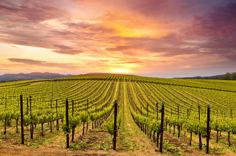 Sit and Sip at these 10 Best of the Best Napa Valley Wineries