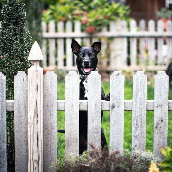 Natural Picket Dog Wood Fence Ideas