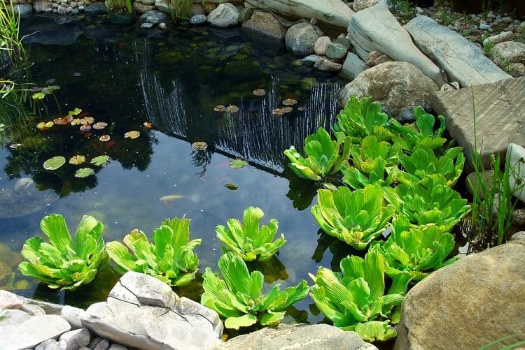 Natural Stone Backyard Small Shallow Pond