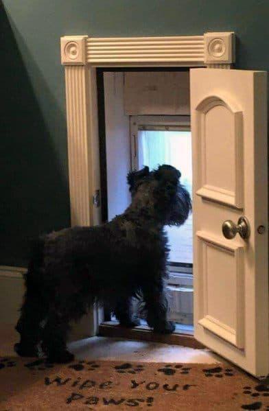 Ornate Mini Door Ideas For Dogs