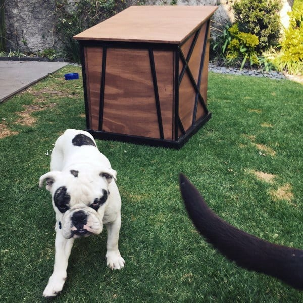 Outdoor Small Dog House Designs