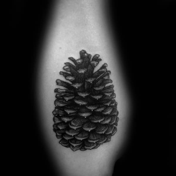 Outer Forearm Tattoo Of Pine Cone On Gentleman
