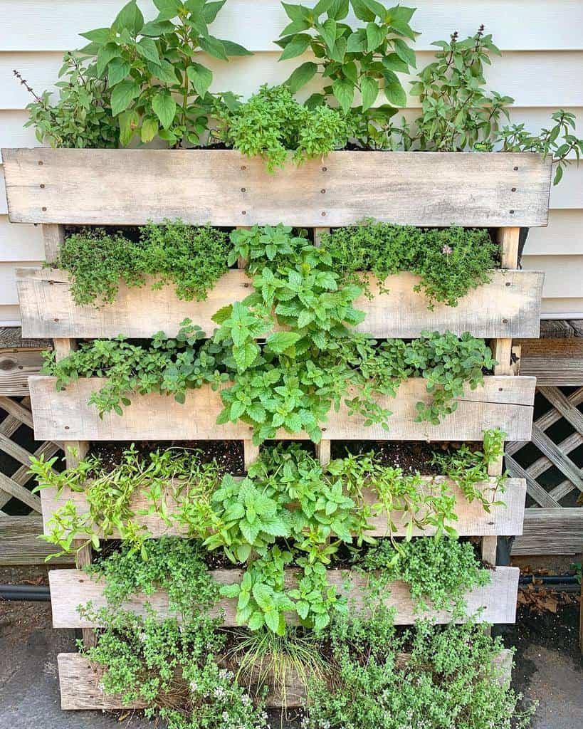 pallet herb garden ideas grubandgarden