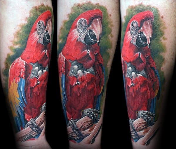 Parrot Tattoos Male On Forearm