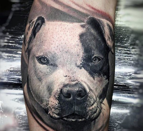 Pitbull Tattoos For Gentlemen On Arm