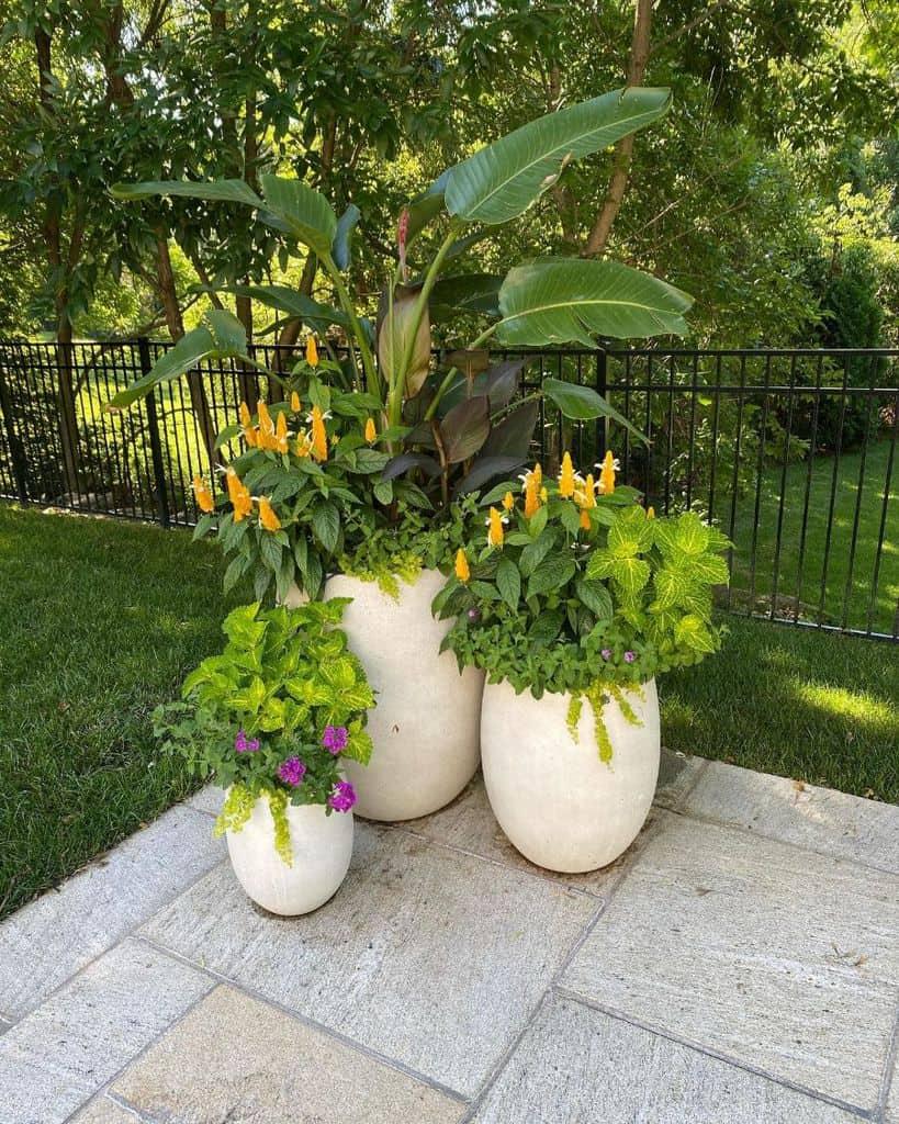 plant decor container garden ideas outdoorscontained