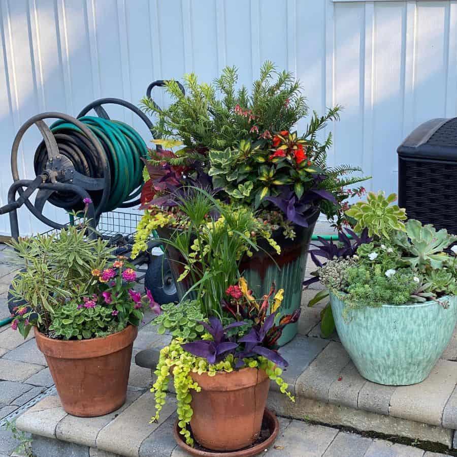 plant decor container garden ideas seasontoseasonhort