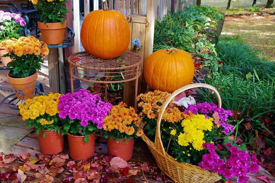 plant decor container garden ideas