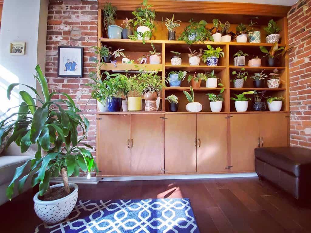 plant shelf indoor garden ideas gardenonthegram_-20200912-ylu8es