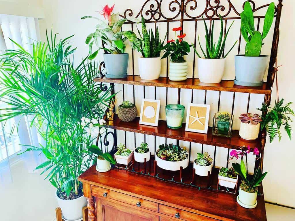 plant shelf indoor garden ideas rebeccarayla