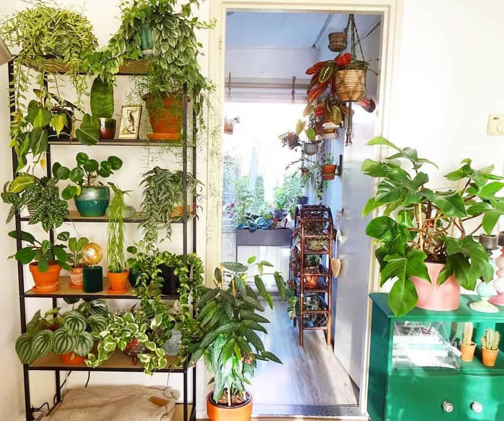 plant stand indoor garden ideas huisje.plantje.beestje
