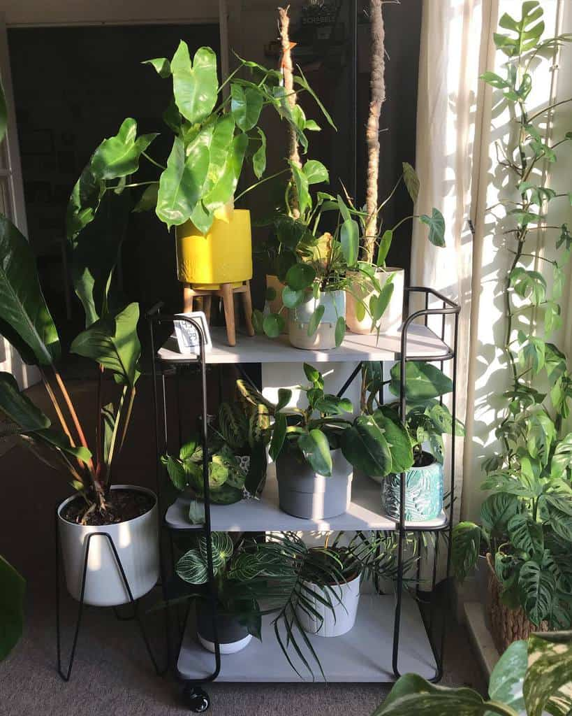 plant stand indoor garden ideas jungletowers