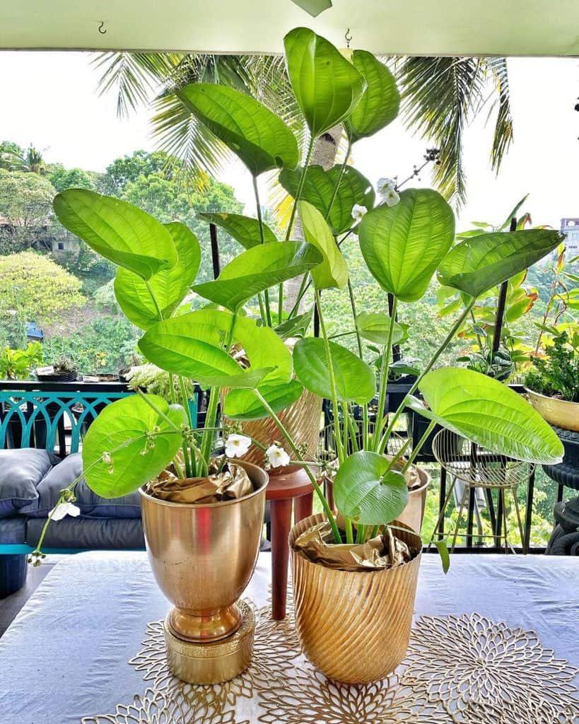 planter ideas container garden ideas anghardinera