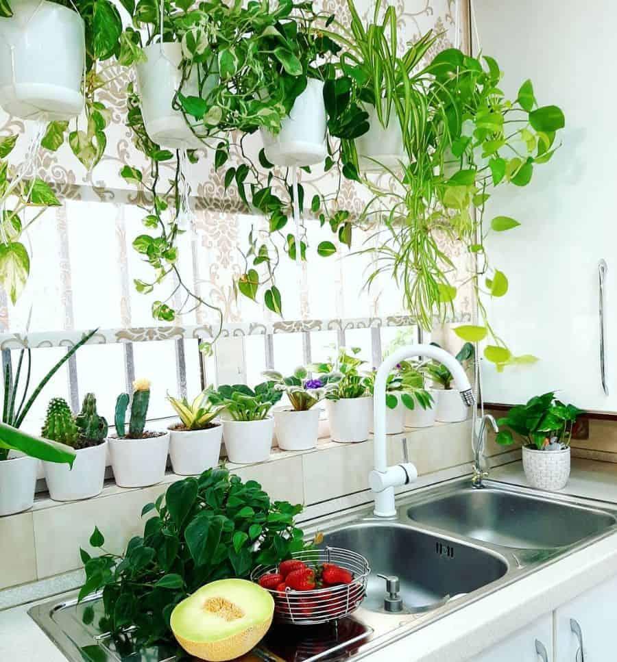 plants kitchen window ideas mahasplant