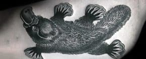 50 Platypus Tattoo Designs For Men – Animal Ink Ideas