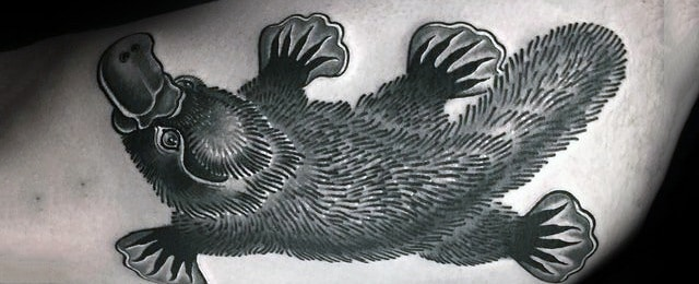 Platypus Tattoo Designs For Men
