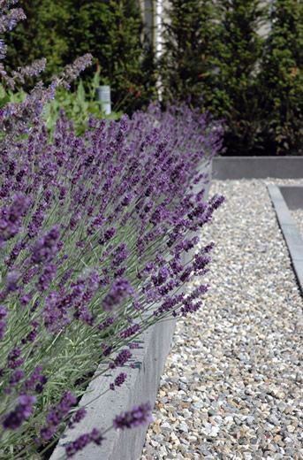 Purple Plants Modern Landscape Design