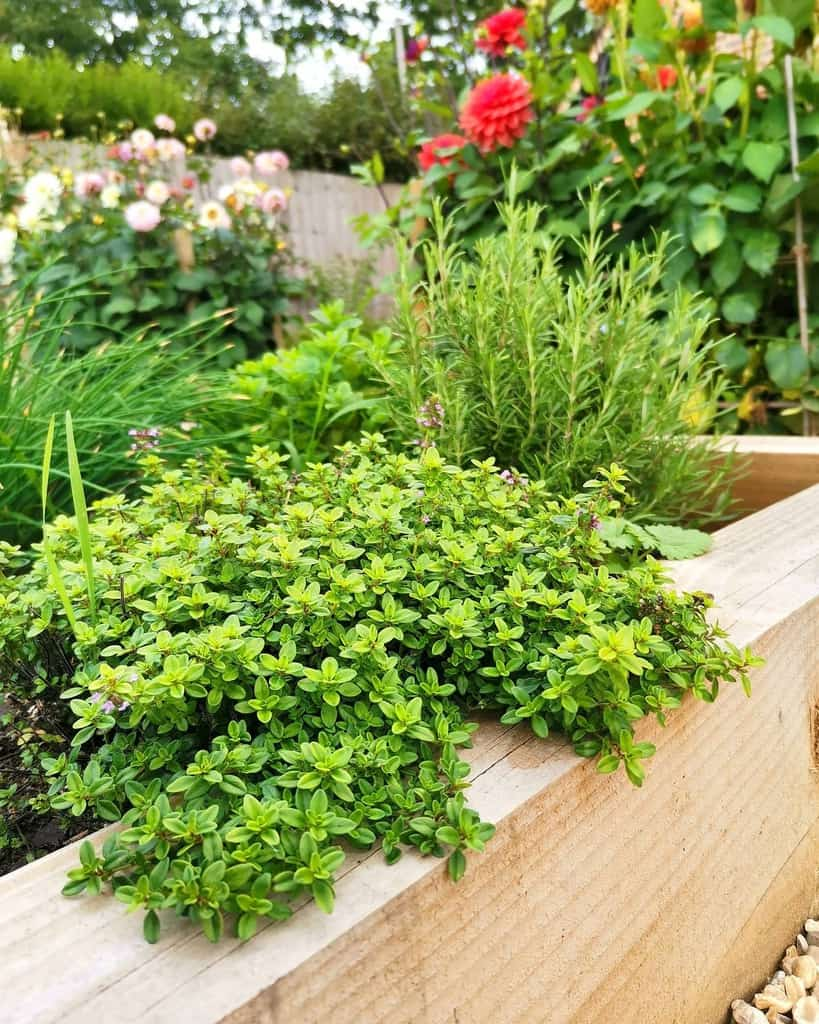 raised bed herb garden ideas marie_cottagelife_