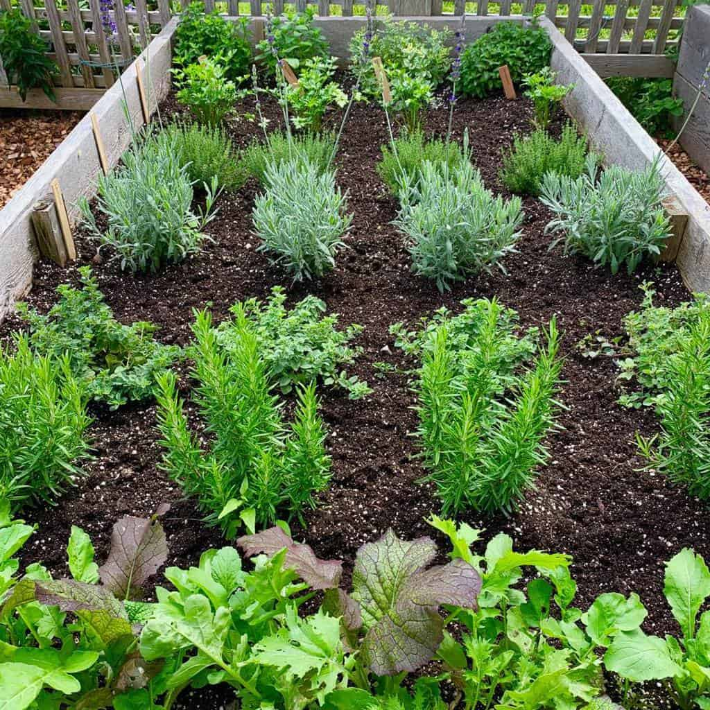 raised bed herb garden ideas thomaslynchdesign
