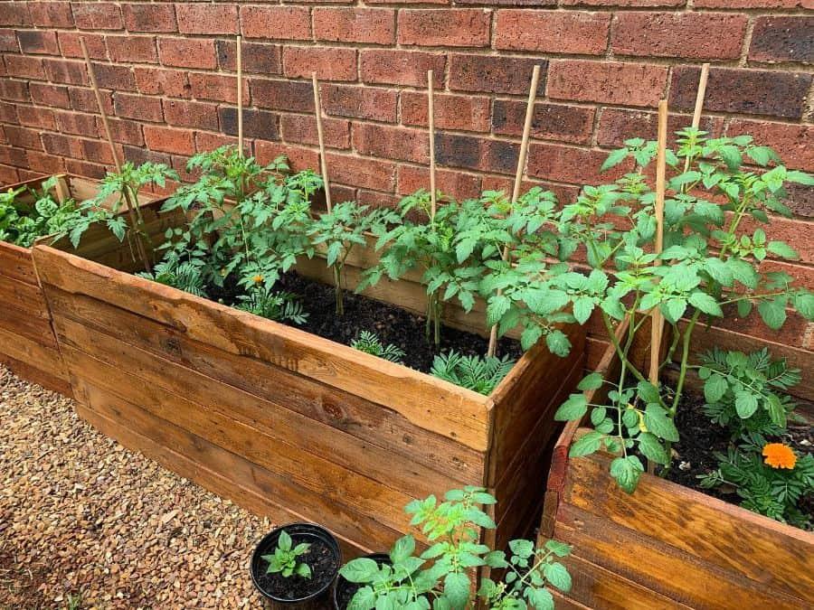 raised bed plant box pallet garden ideas veggiepatch_joburg