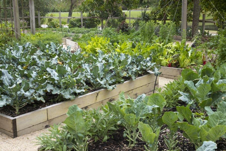 raised bed vegetable garden ideas 2