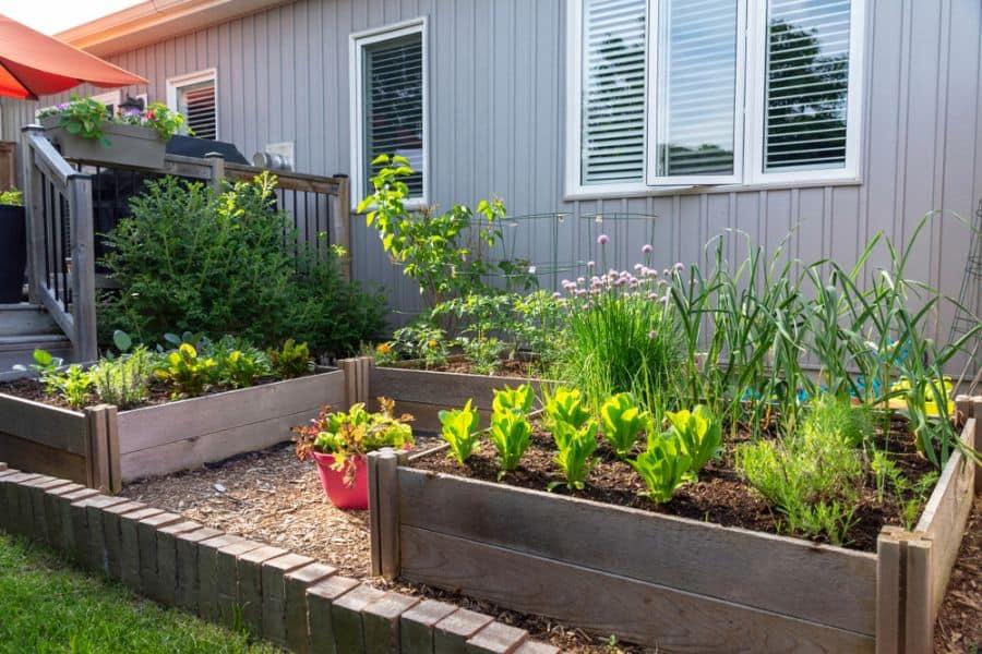 raised bed vegetable garden ideas 3