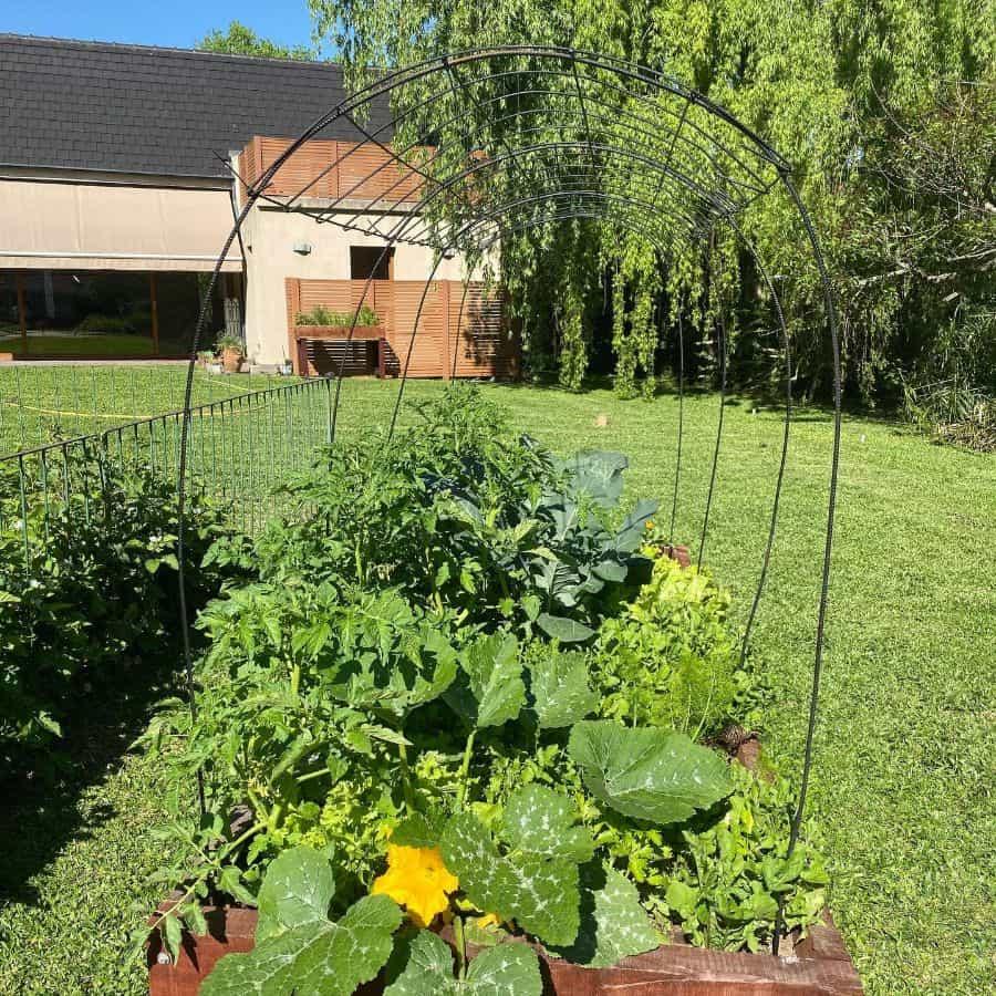 raised bed vegetable garden ideas delgorro