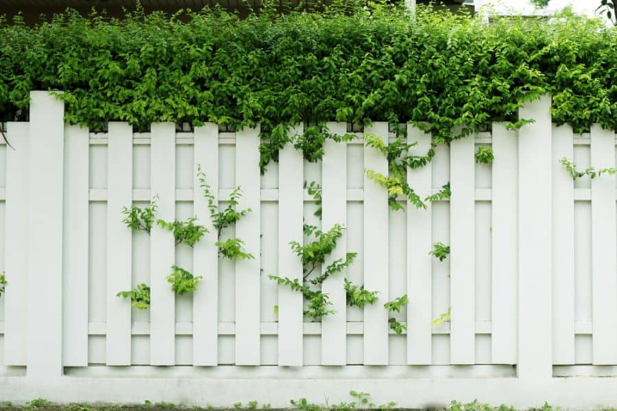 Ranch Or Country Wood Fence Ideas (7)