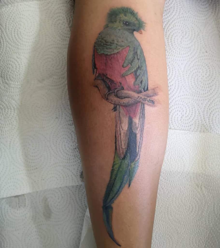 Realistic Quetzal Tattoos Scummy Tattoo