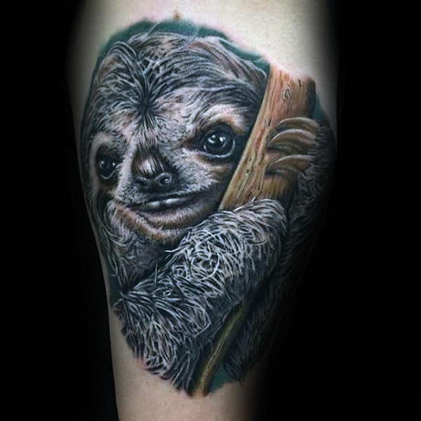 Realistic Sloth In Tree Tattoos For Guys On Arm
