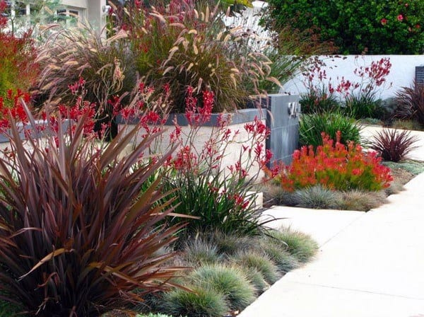 Red Plants Modern Landscape Design