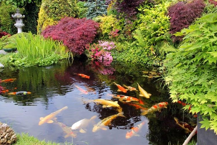 Relaxing Backyard Koi Pond