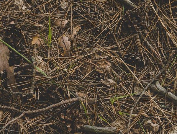Restoration Ecologist Outdoor Wilderness Jobs