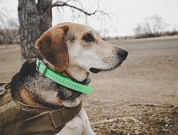 Reviewed Sportdog Brand Tek 1 5 Gps Tracking Plus E Collar