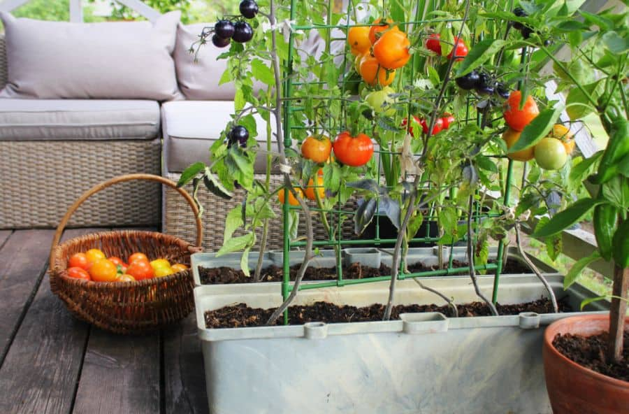 rooftop or balcony vegetable garden ideas 1