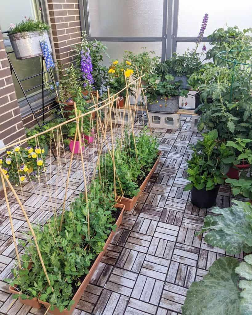 rooftop or balcony vegetable garden ideas 2 mays.balcony.garden