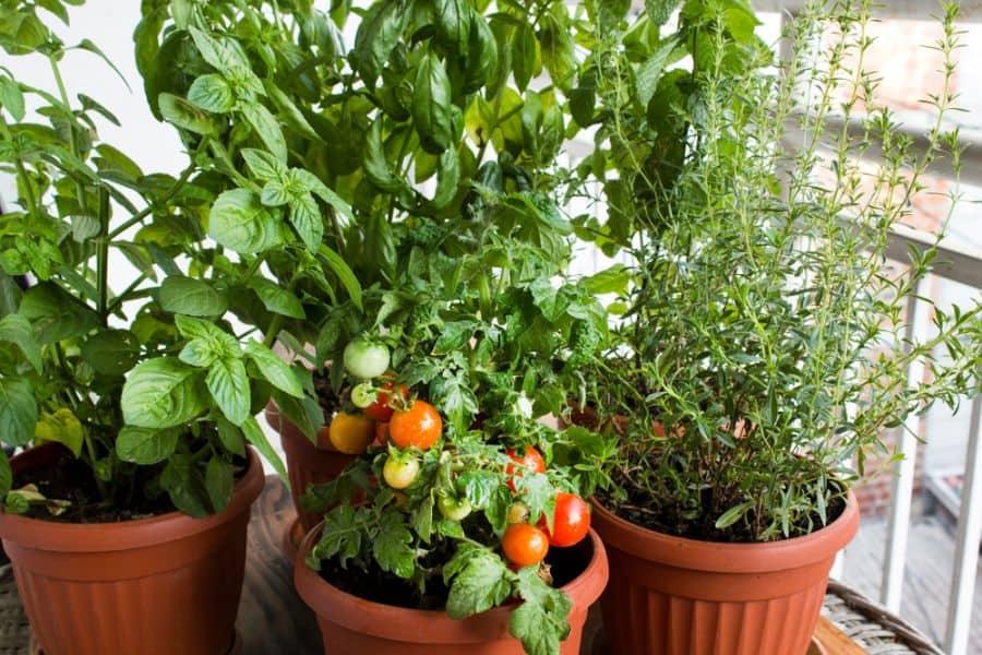 rooftop or balcony vegetable garden ideas 2