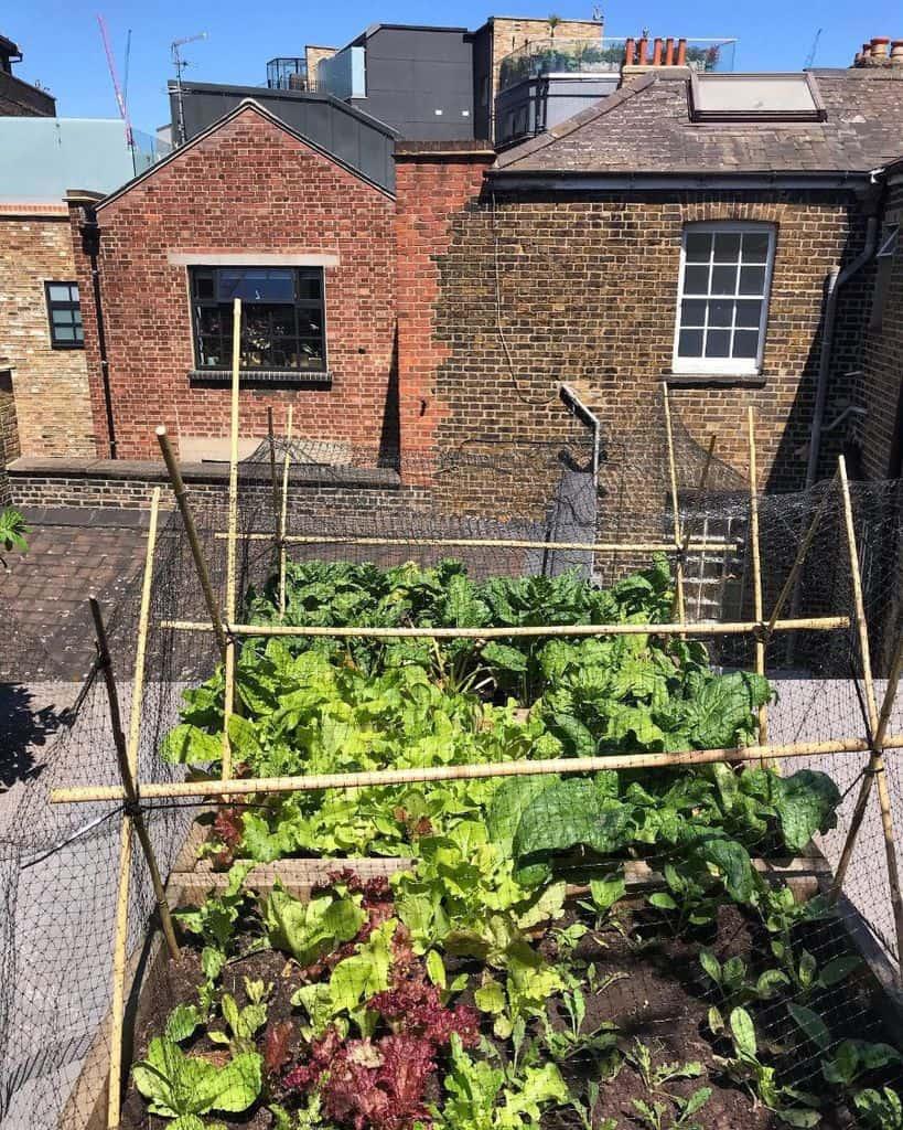 rooftop or balcony vegetable garden ideas catherinesvarsker