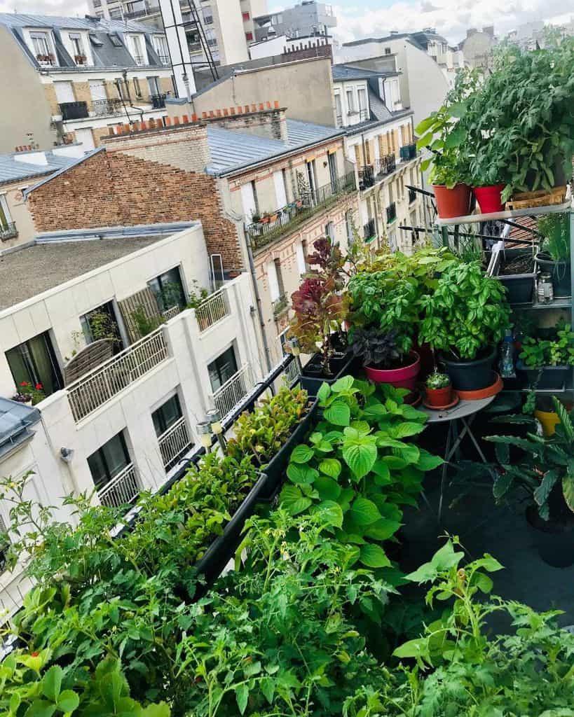 rooftop or balcony vegetable garden ideas parisian_gardener