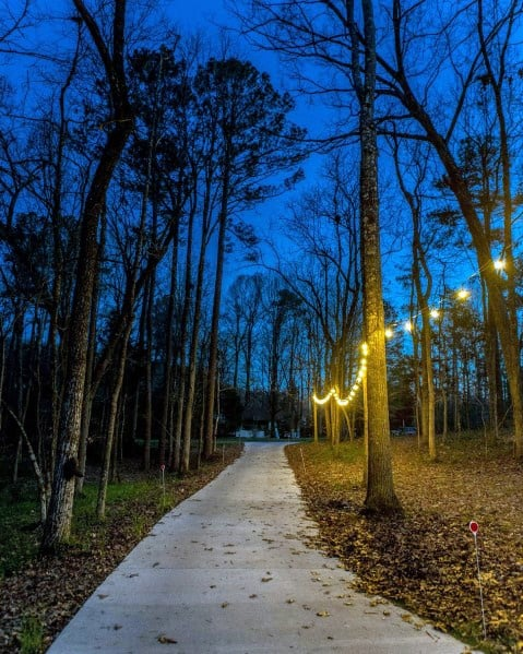 Rope Lighting On Trees Designs Driveway Lighting