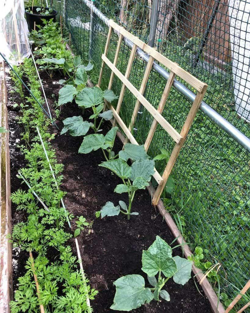 screened or fenced veggie garden vegetable garden ideas 2 thevegframe
