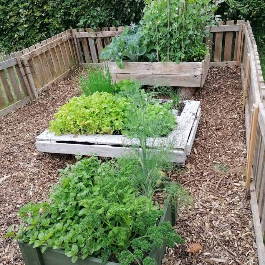 screened or fenced veggie garden vegetable garden ideas andreaherron1