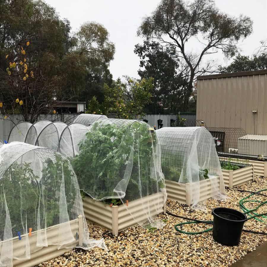 screened or fenced veggie garden vegetable garden ideas hayleys_kitchengarden