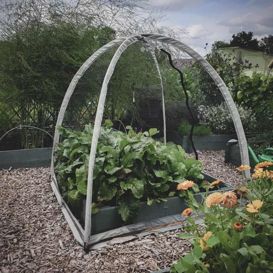 screened or fenced veggie garden vegetable garden ideas janewestoby