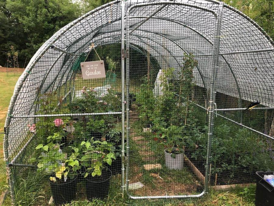 screened or fenced veggie garden vegetable garden ideas thevegframe