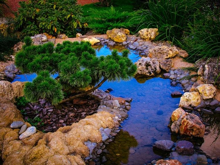 Shallow Unique Backyard Garden Pond