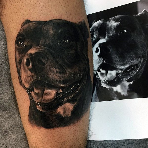 Sharp Pitbull Male Tattoo Ideas