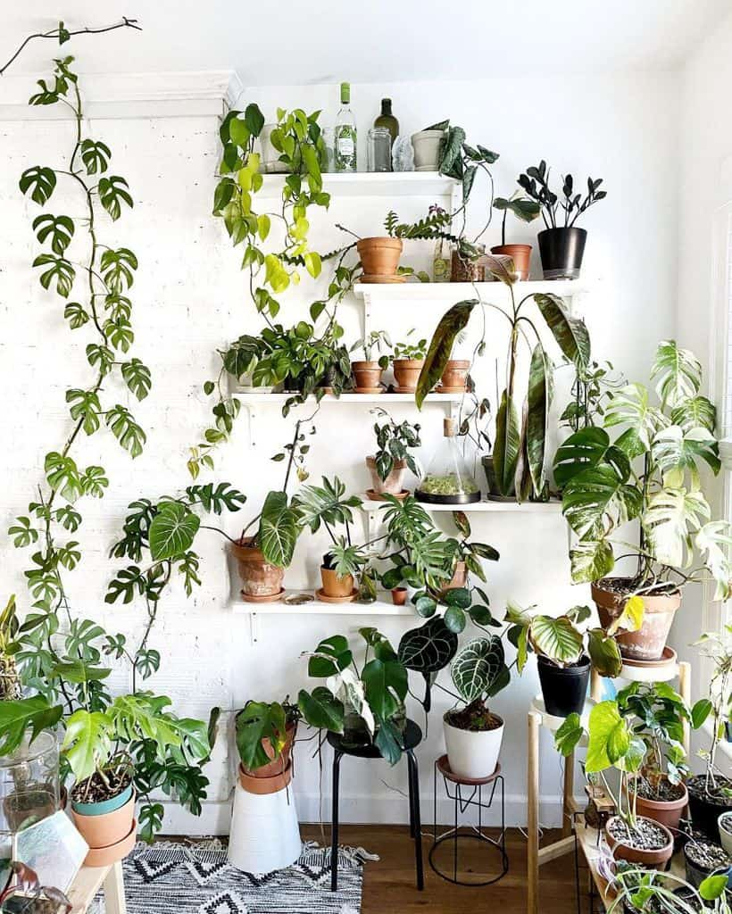 shelves greenhouse ideas james_renaud