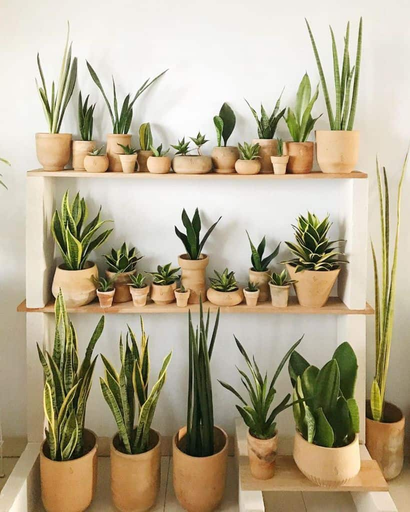 shelving and stand for vertical garden ideas botanee_